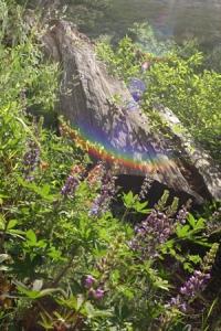 お花畑と虹
